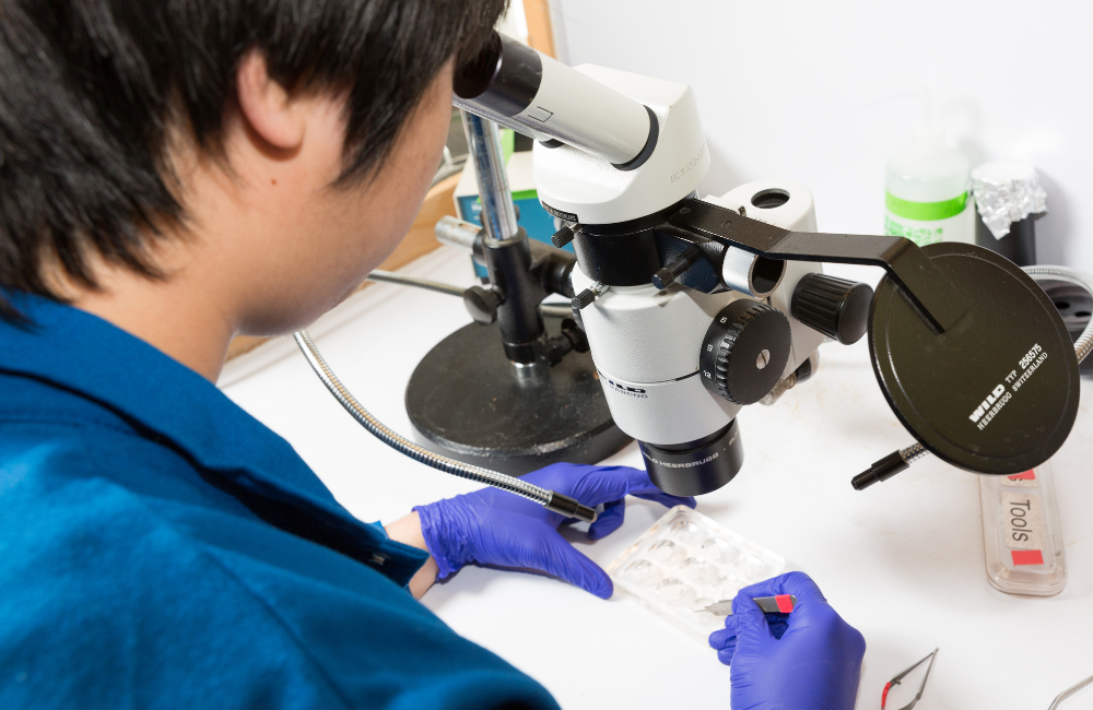 UCI Scientist in lab with microscope